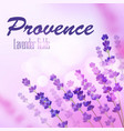 provence lavender field background vector image