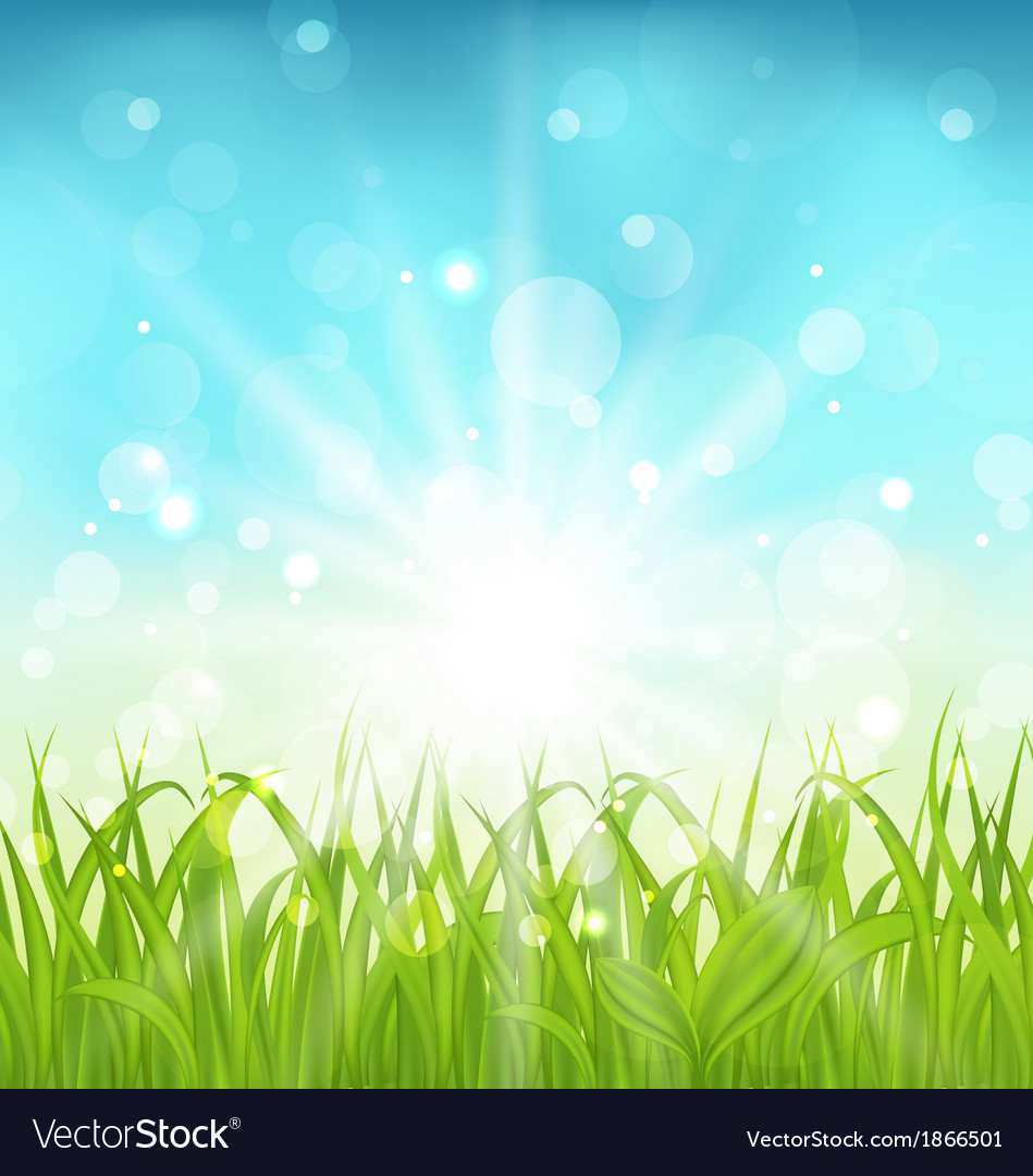 Spring nature background with grass vector