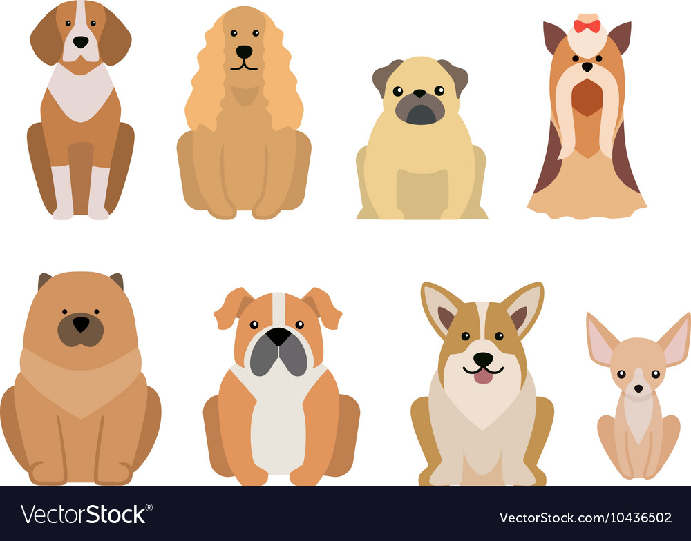 Different dogs breed isolated on white vector