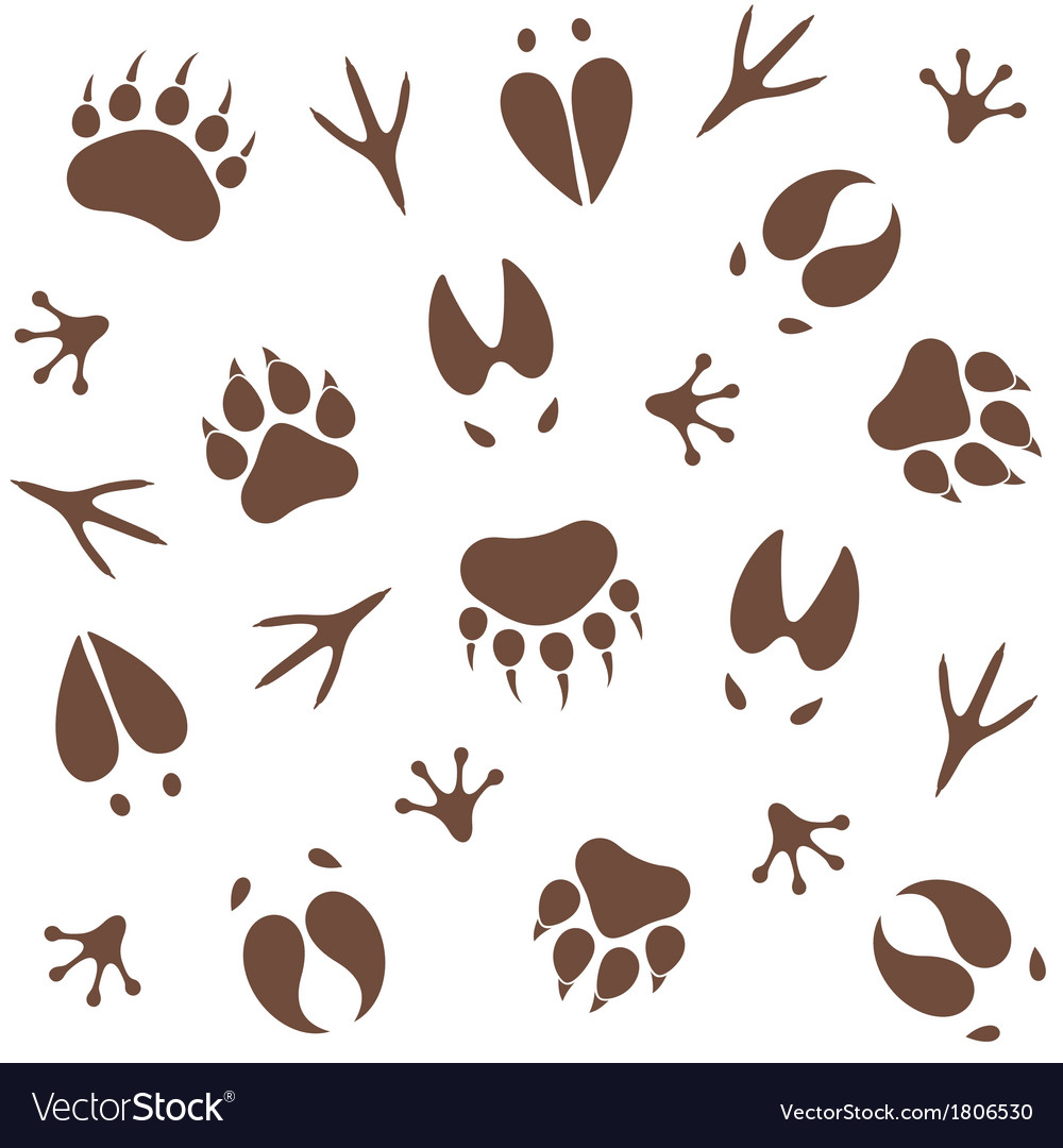 Paw print pattern vector