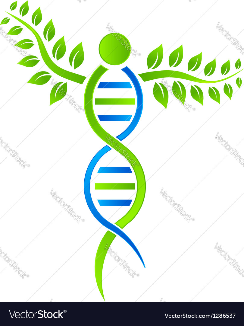 Dna plant vector