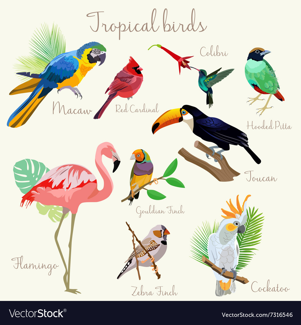 Bright color exotic tropical birds set isolated vector