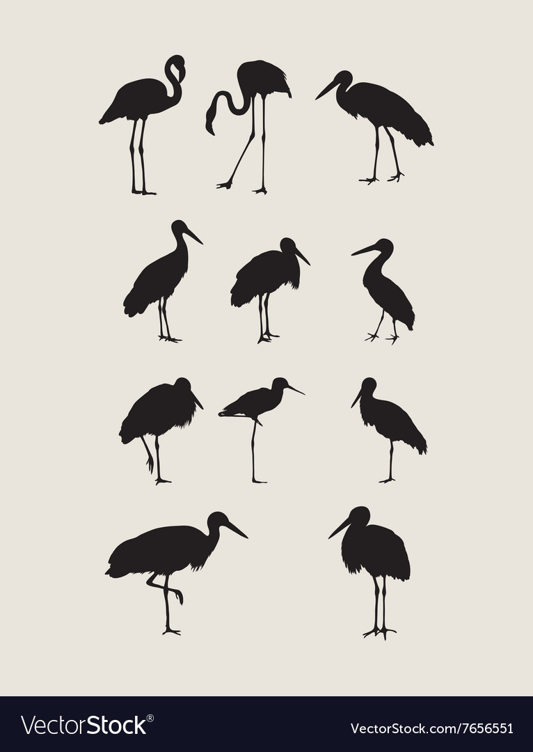 Stork and heron silhouettes vector