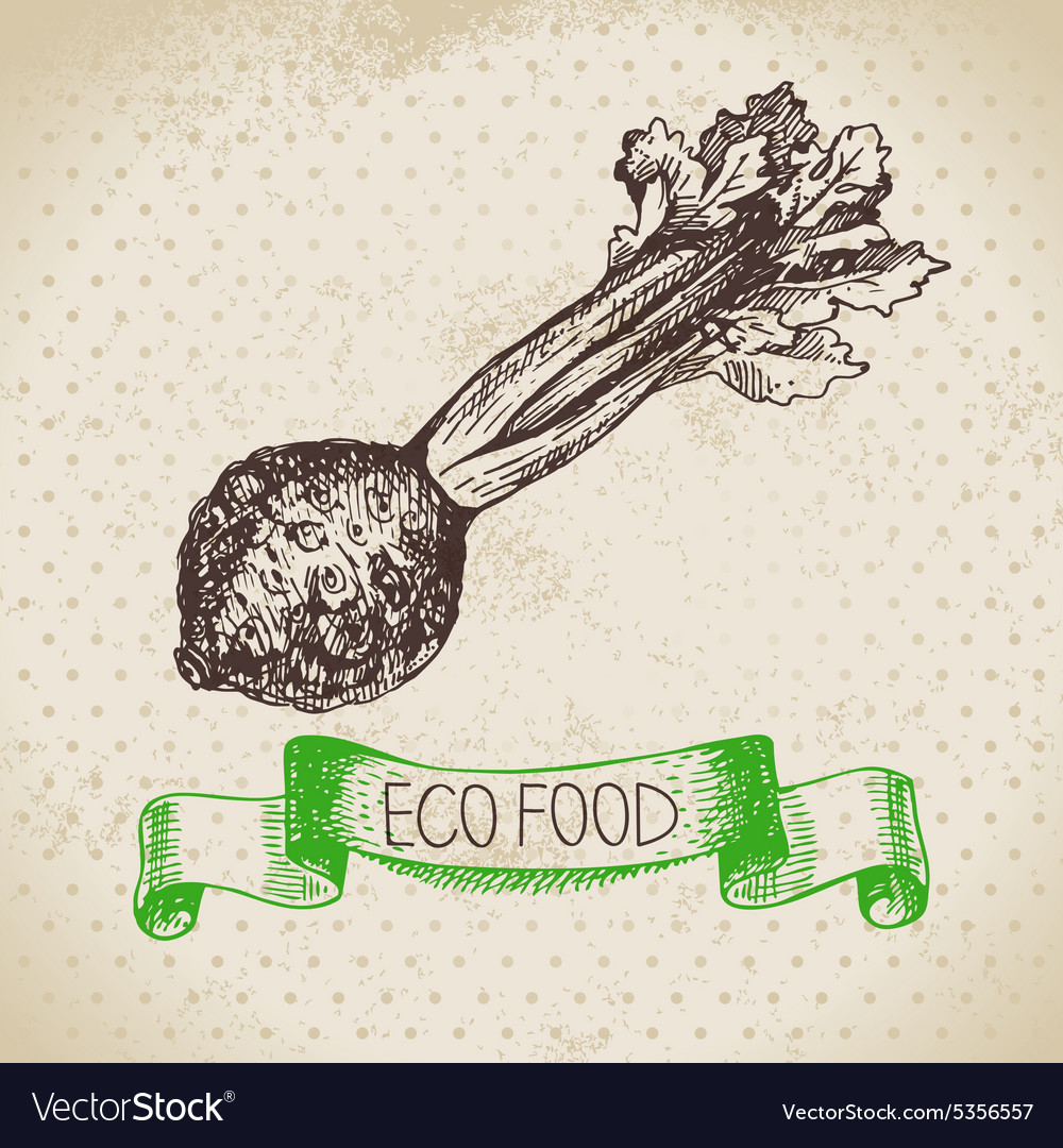 Hand drawn sketch celery vegetable eco food vector