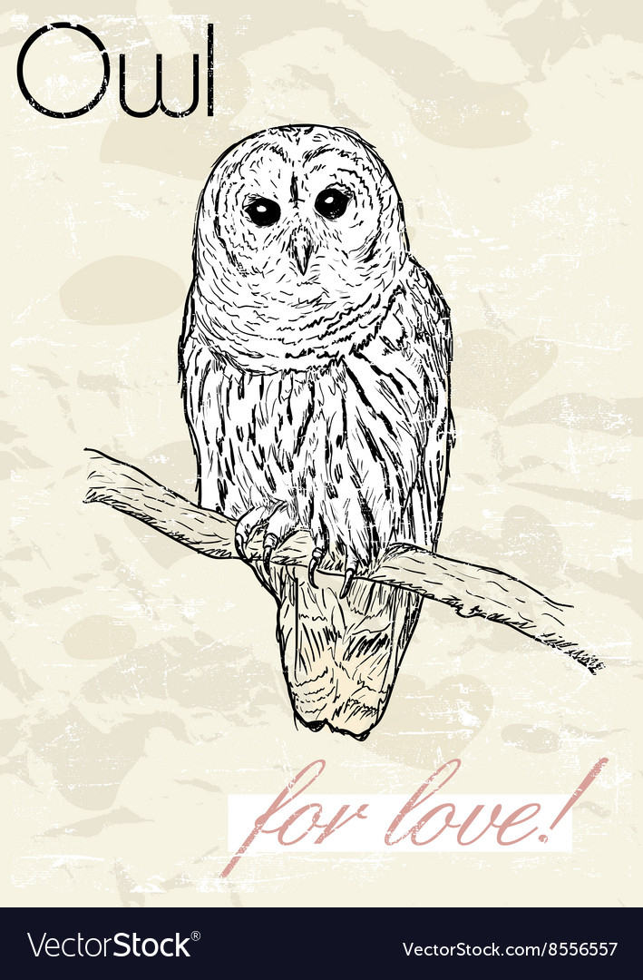 Poster with owl vintage style vector