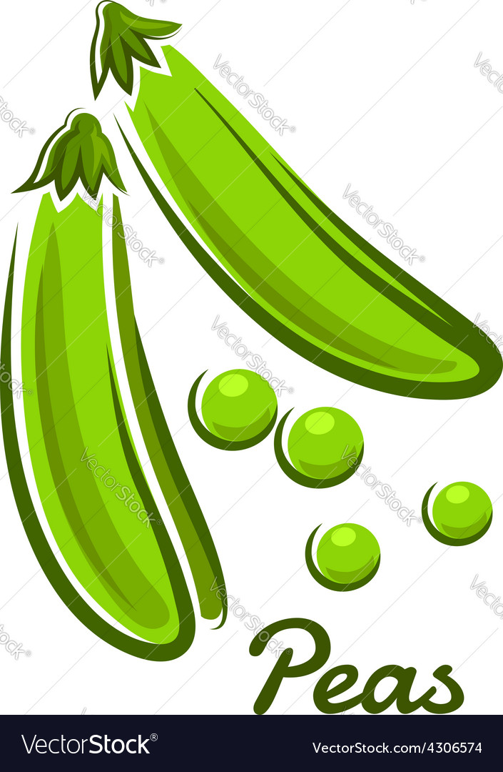 Green pea pods in cartoon style vector