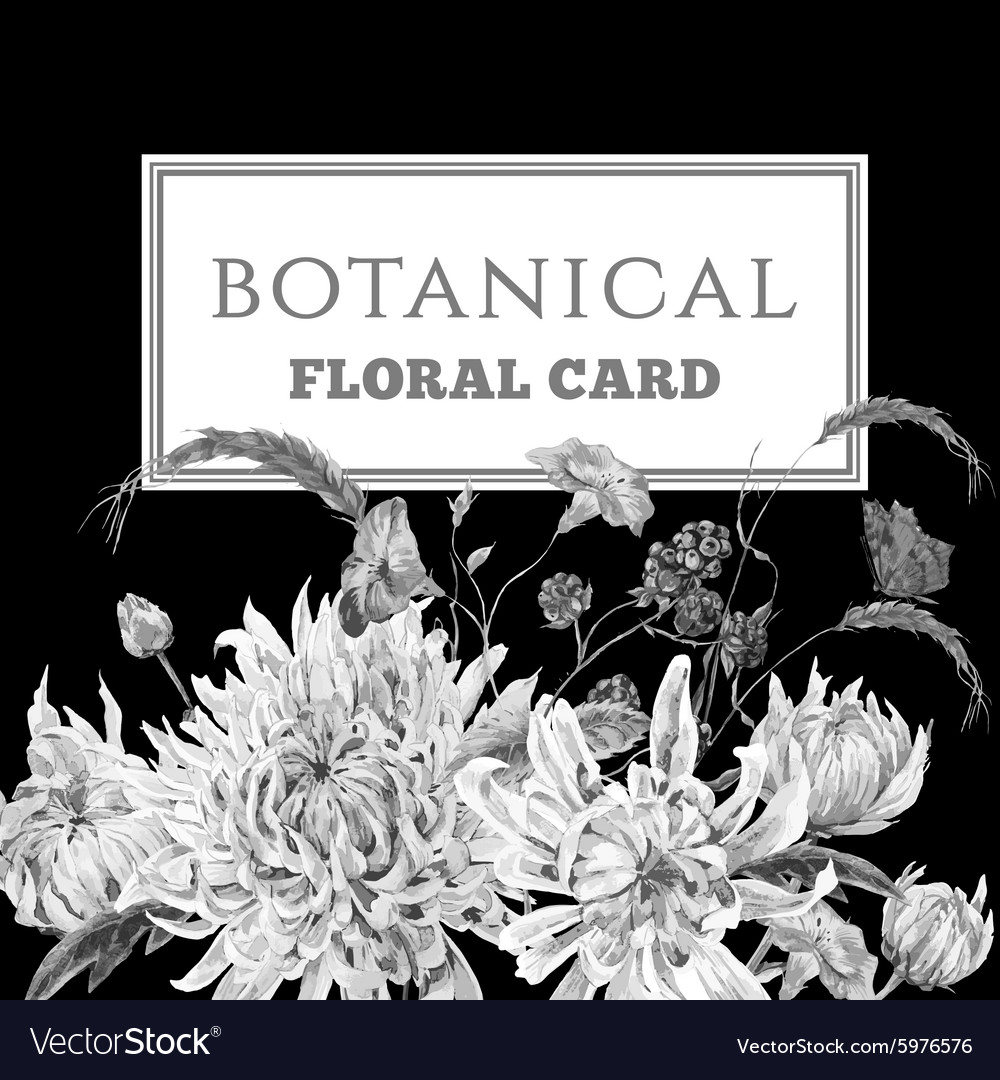 Monochrome vintage floral card with chrysanthemums vector