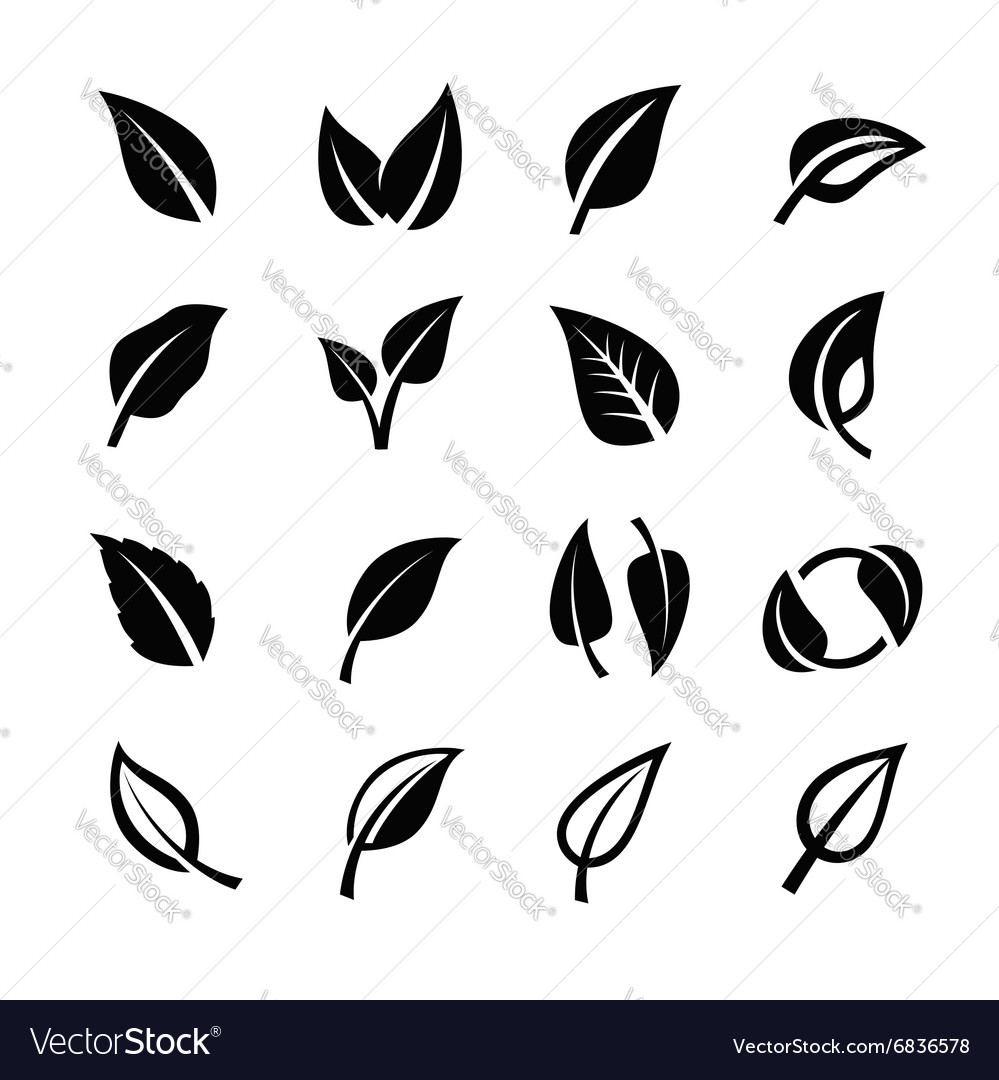 Leaf nature vector