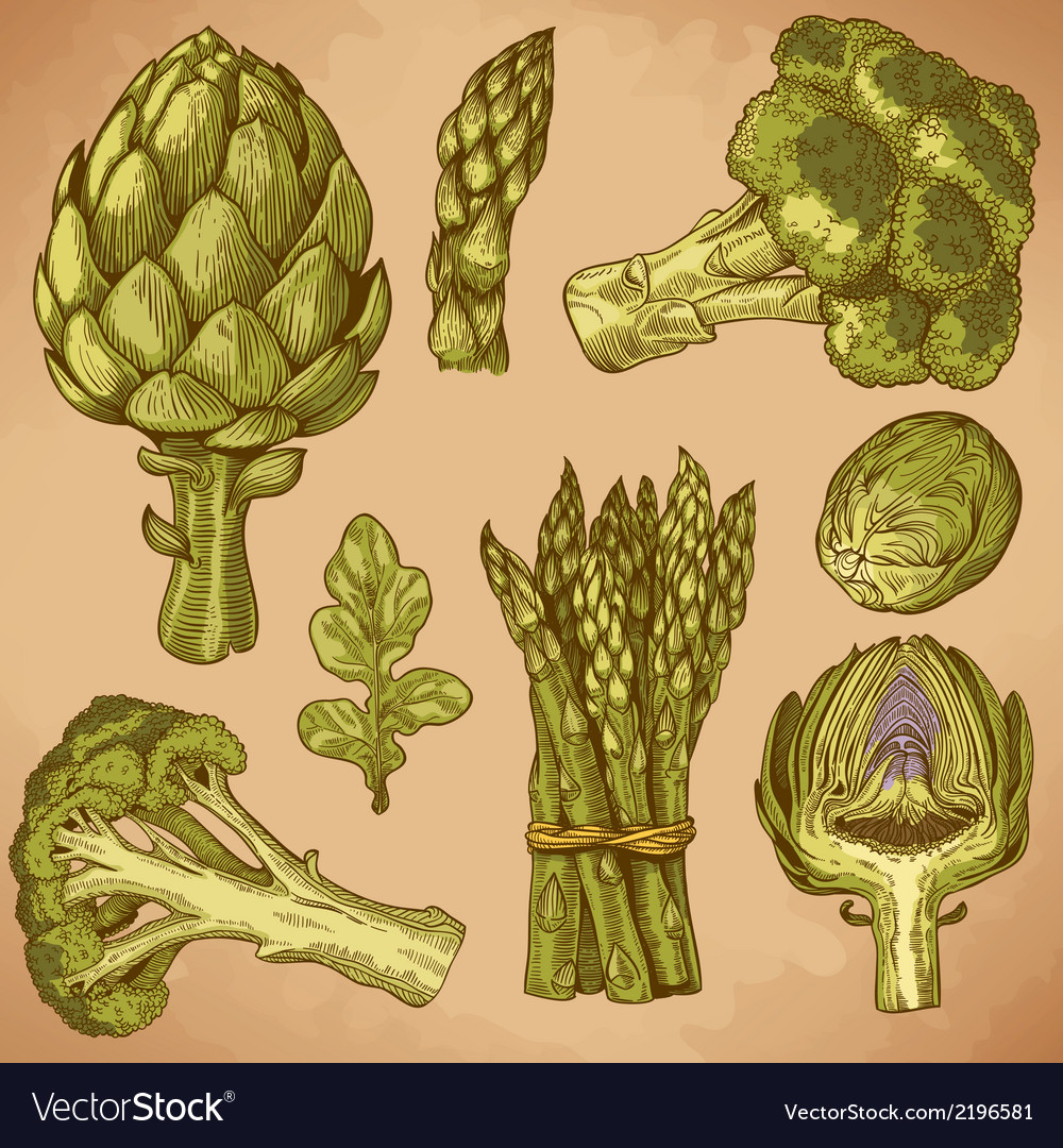 Engraving green vegetables retro vector