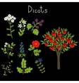 Examples of dicots vector image