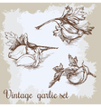 hand drawn garlic set Vintage retro background vector image