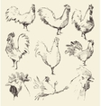 Set hand drawn roosters sketch vector image