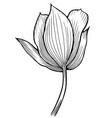 spring flower image vector image