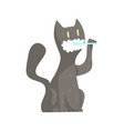cute cartoon grey cat brushing teeth with tooth vector image