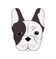 french bulldog icon vector image