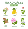 Herbs and spices collection 11 vector image