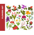 fresh flowers colorful flat poster on white vector image
