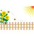 Background sunflower vector image