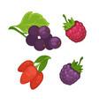 Fresh berries set on white poster in vector image
