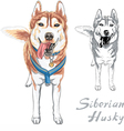 dog Siberian Husky breed standng and smiling vector image vector image