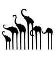 set silhouettes of elephants vector image