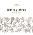 seamless border herbs and spices vector image