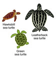 three kinds of turtles vector image