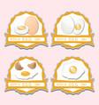 white eggs vector image