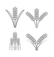 icon rice vector image