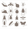 Insects Contour image vector image