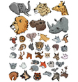 set of of different kinds of mammals vector image vector image