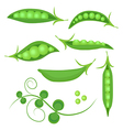 Set of fresh green peas isolated vector image