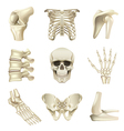Human bones icons set vector image