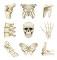 Human bones icons set vector image