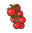 Sketch style drawing of shiny ripe red cherry vector image