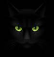 Cats eyes vector image