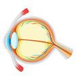 Diagram of eyes disease vector image vector image
