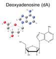 Structural chemical model of deoxyadenosine vector image