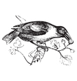 hawfinch vintage engraving vector image