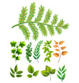 different types of leaves vector image