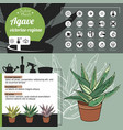 Template for indoor plant agave tipical flowers vector image