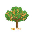 peach garden fruit tree with name vector image