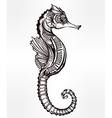 seahorse line art vector image
