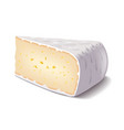 Brie cheese isolated on white vector image