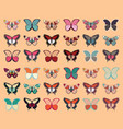 collection of thirty six colorful butterflies vector image