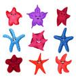 colourful starfishes set underwater invertebrate vector image