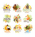 exotic summer vacation colorful graphic design vector image vector image