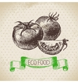Hand drawn sketch tomato vegetable Eco food vector image