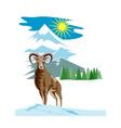 Mouflon Sheep Mountain Goat vector image