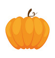 pumpkin fresh isolated icon vector image